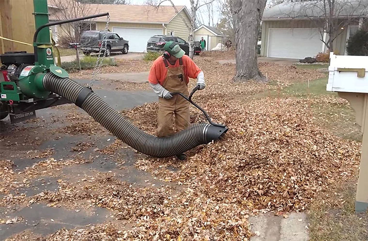 Leaf Cleanup and Removal Service