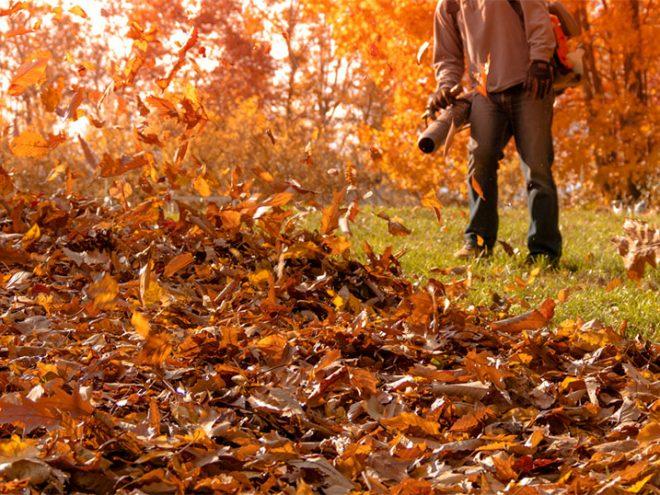 Leaf Cleanup Service