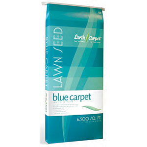 Blue Carpet Lawn Seed