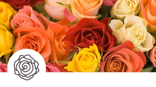 Buy Potted Roses